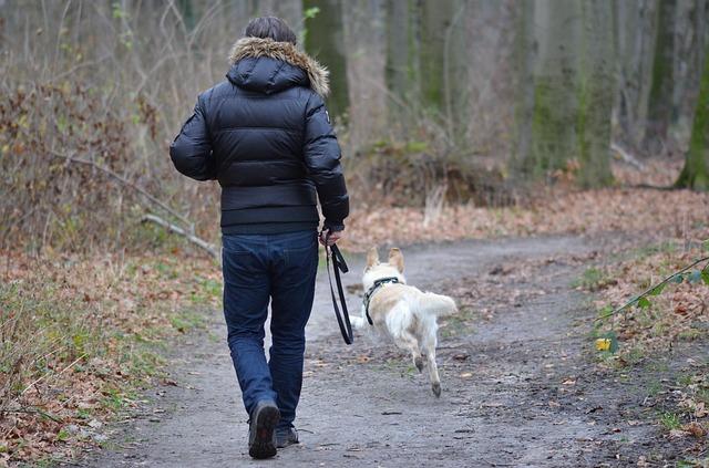 pes a procházka