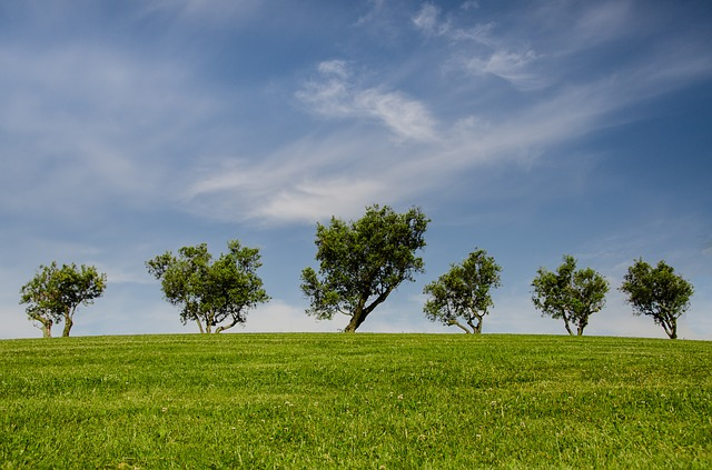 stromy a louka.jpg
